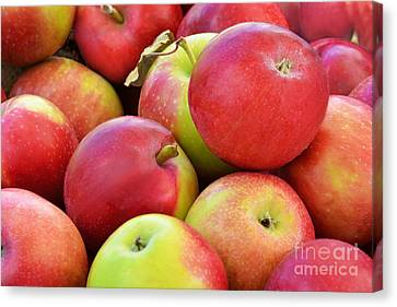 Farmstand  Fresh-picked  Apples Canvas Print by Regina Geoghan