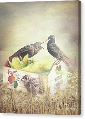 Farmstand Starlings Canvas Print