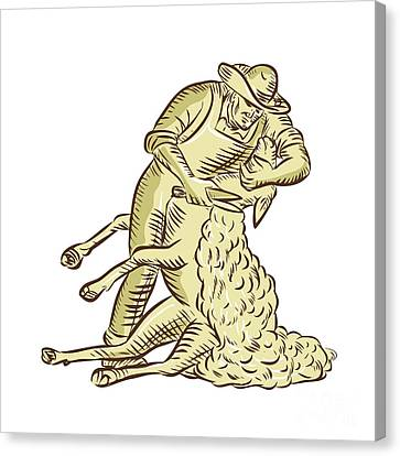 Farmworker Shearing Sheep Etching Canvas Print by Aloysius Patrimonio