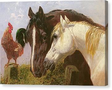 Farmyard Friends Herring Jnr Canvas Print