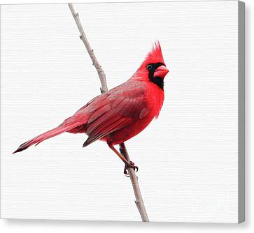 Father's Day Cardinal Canvas Print