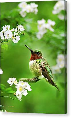 Fauna And Flora - Hummingbird With Flowers Canvas Print