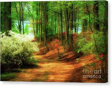 Favorite Path Canvas Print by Lois Bryan
