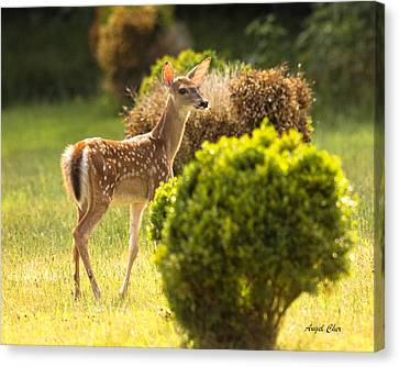 Canvas Print featuring the photograph Fawn by Angel Cher