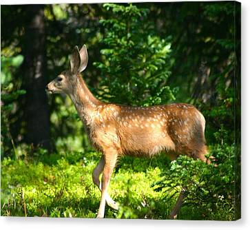 Fawn In Woods Canvas Print