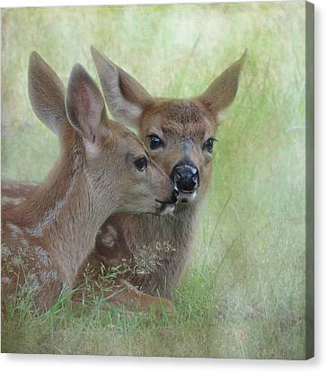 Canvas Print featuring the photograph Fawn Secrets by Sally Banfill