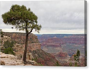 Fearless Tree Canvas Print