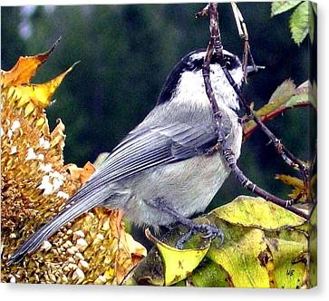 Feast For A Chickadee Canvas Print by Will Borden