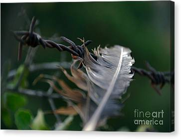 Feather And Barbed Wire Canvas Print