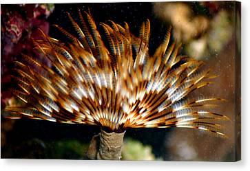 Feather Duster Canvas Print by Anthony Jones