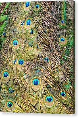Canvas Print featuring the photograph Feather Finesse by Margaret Bobb