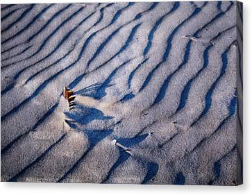 Canvas Print featuring the photograph Feather In Sand by Michelle Calkins