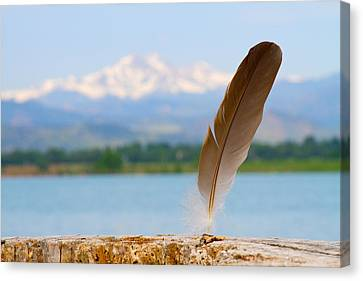 Feather Canvas Print by James BO  Insogna