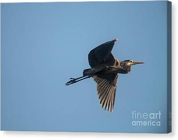 Canvas Print featuring the photograph Feathering The Nest by David Bearden