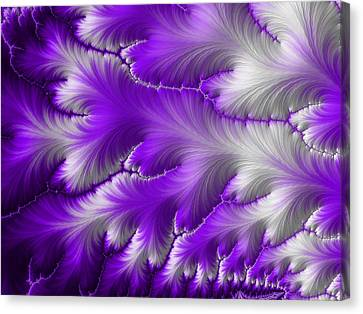Feathers Canvas Print by Darren Hayes