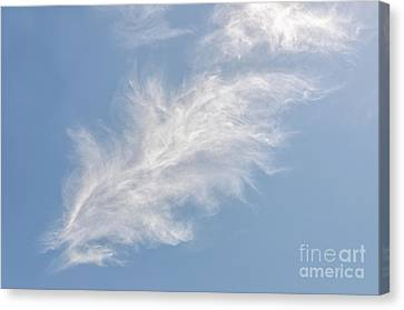Canvas Print featuring the photograph Feathers In The Sky by Sue Smith