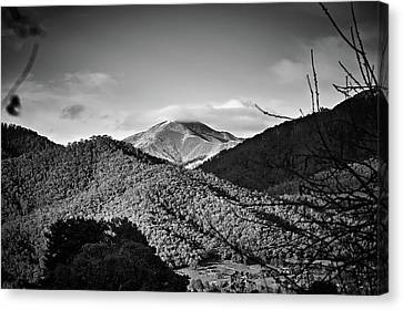 Feathertop Canvas Print by Mark Lucey