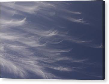 Canvas Print featuring the photograph Feathery Sky by Shari Jardina