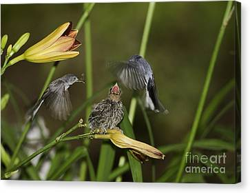 Feeding Frenzy 12 Canvas Print by E Mac MacKay