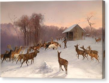 Feeding Of Fallow Deer And Red Deer In Winter Canvas Print by Mountain Dreams