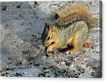 Feeding Squirrel 1timothy 4 V 4 Canvas Print by Linda Phelps