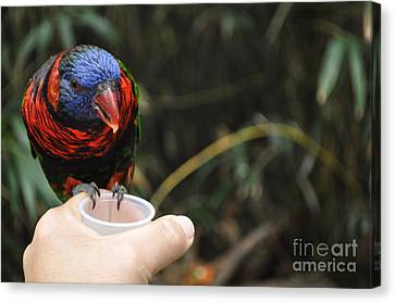 Feeding The Birds Canvas Print