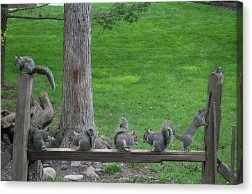 Canvas Print - Feeding Time At The Fence by Dan Friend