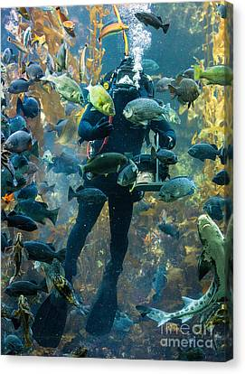 Feeding Time At The Monterey Bay Aquarium Canvas Print by Jerry Fornarotto