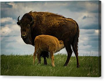 Canvas Print featuring the photograph Feeding Time II by Gary Lengyel