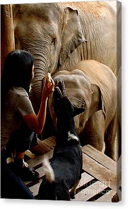 Canvas Print featuring the photograph Feeding Time by Louise Fahy