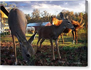 Feeling At Home Canvas Print by Bill Stephens