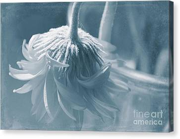Aging Canvas Print - Feeling Blue  by Mellissa Ray