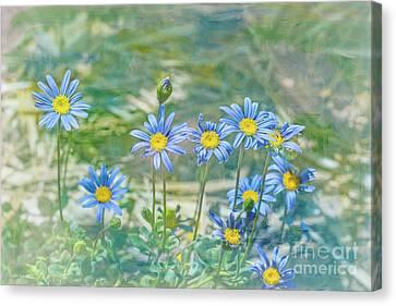 Feeling Blue Canvas Print by Elaine Teague