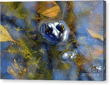Web Gallery Canvas Print - Feeling Froggy by Robyn King
