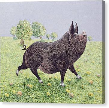 Piglet Canvas Print - Feeling Great  by Pat Scott