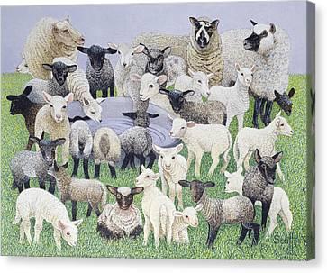 Lambing Canvas Print - Feeling Sheepish by Pat Scott