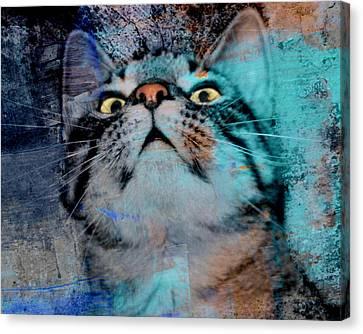 Feline Focus Canvas Print by Kathy M Krause