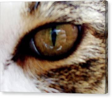 Feline Frenzy Canvas Print by Ali Dover