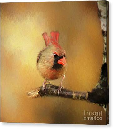 Canvas Print featuring the photograph Female Cardinal Excited For Spring by Darren Fisher
