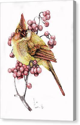 Female Cardinal Canvas Print by Preston Shupp