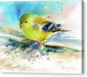 Female Goldfinch Canvas Print by Christy Lemp