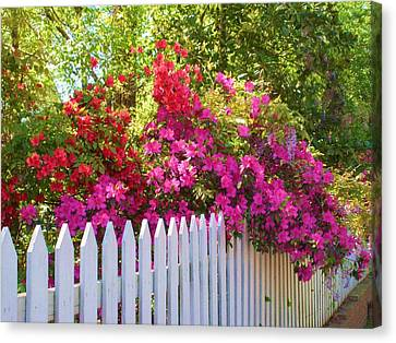 Fence Of Beauty Canvas Print