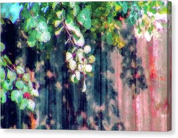 Fence Painting Canvas Print
