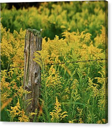 Fence Post7139 Canvas Print