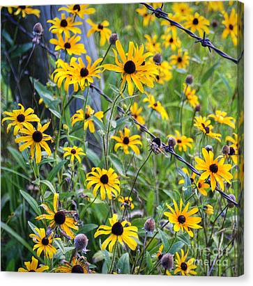 Fence Row Flowers Canvas Print by Pete Hellmann