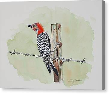 Barbed Wire Fences Canvas Print - Fence Sitting by Sonja Jones
