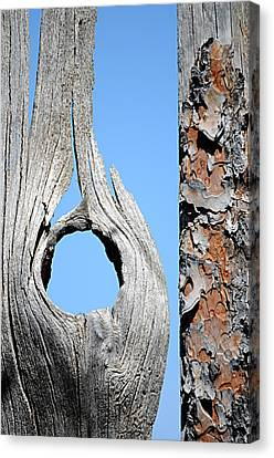 Fencework Canvas Print
