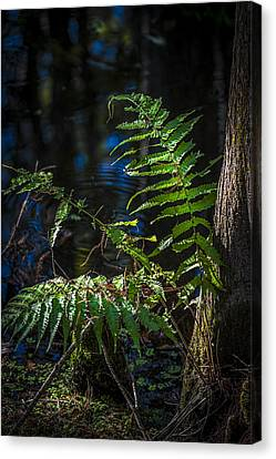 Fern And Cypress Canvas Print by Marvin Spates