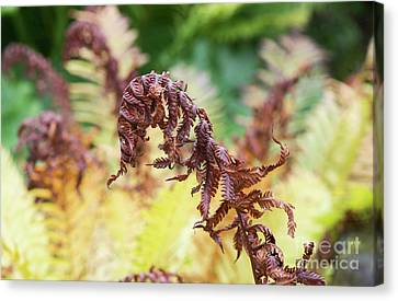 Fern Decay Canvas Print