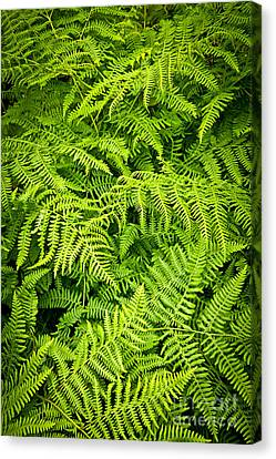 Fern Canvas Print by Elena Elisseeva